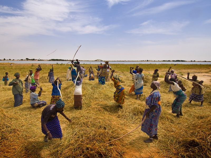 Jpg_agriculture_malienne