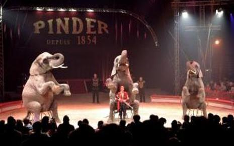 7755898219_un-numero-de-dressage-d-elephants-du-cirque-pinder